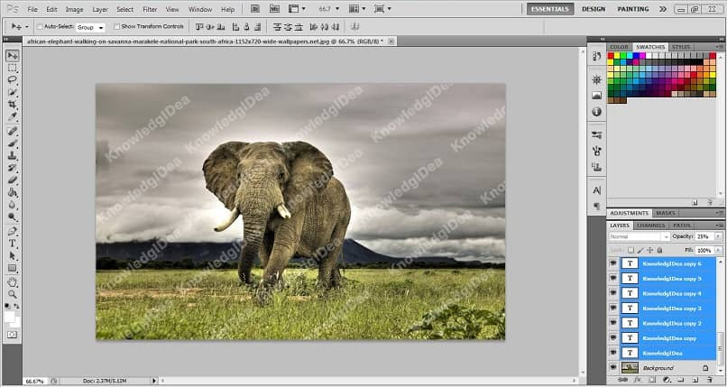 image of an elephant with watermark