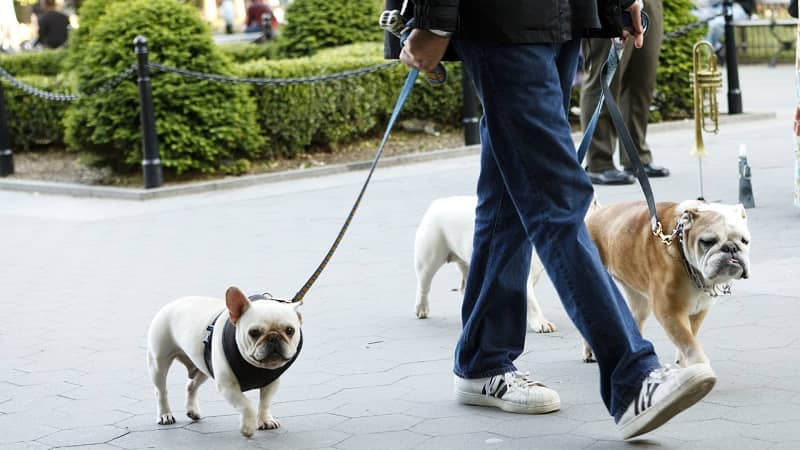 What Are The Best App To Find Dog Walkers? - Doggygo