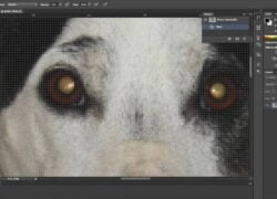 How to Remove or Eliminate Glowing Eyes from My Dog's Photo with Photoshop (Example)