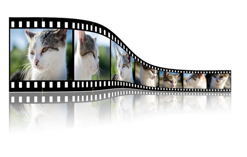movie with images of cats
